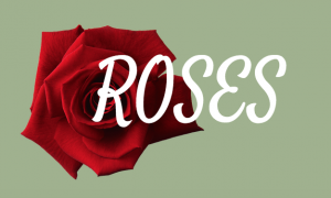 A color guide to roses and what they mean