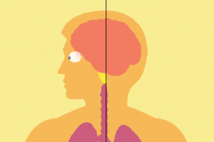 Breaking it down: How marijuana impacts health