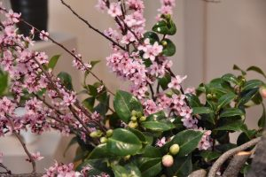 Wafu Ikebana Flower Show: Spring Awakening