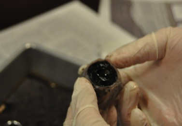 PHOTO GALLERY: Cow Eye Dissection