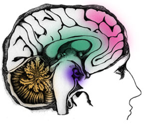 The pre-frontal cortex, the pink region of the mind responsible for decision-making, is still developing during adolescence. Similar to most parts of the brain, the pre-frontal cortex needs to be exercised in order to develop independence — meaning that parents' attempts to make decisions for their kids may jeopardize the development of independent thinking.