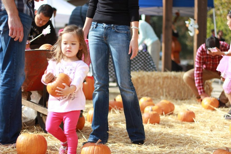 Harvest Festival: Photo gallery