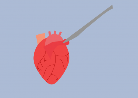 FPPN and SNHS collaborate to conduct heart dissections
