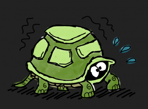 Coming out of my shell: tortoise troubles