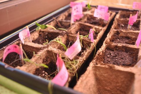 A Fresh Start for MV Sprouts