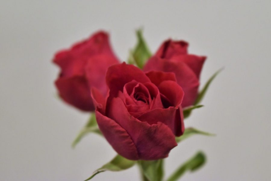 Four DIYs to make with roses