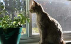 The tale of the traveling mint plants