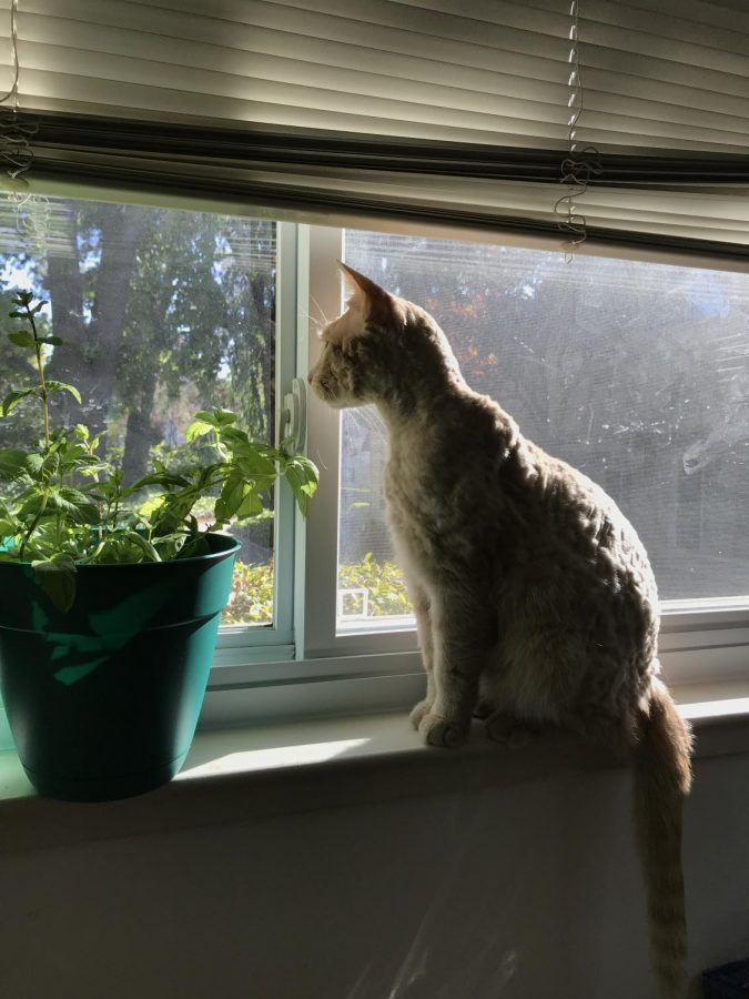 The tale of the traveling mint plants: what flea extermination taught me about a change in routine