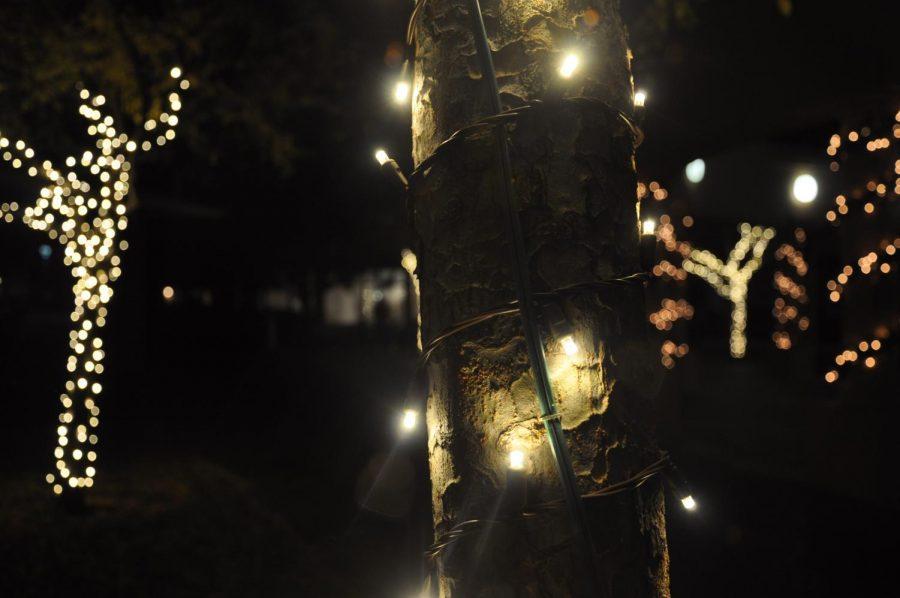 Annual Cupertino Christmas Tree Lighting