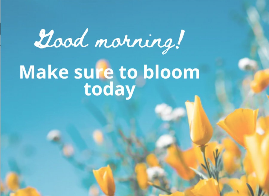 My image has all the elements of a perfect Whatsapp good morning message — flowers, a cheesy caption that doesn't make a lot of sense, and fonts that don't match.