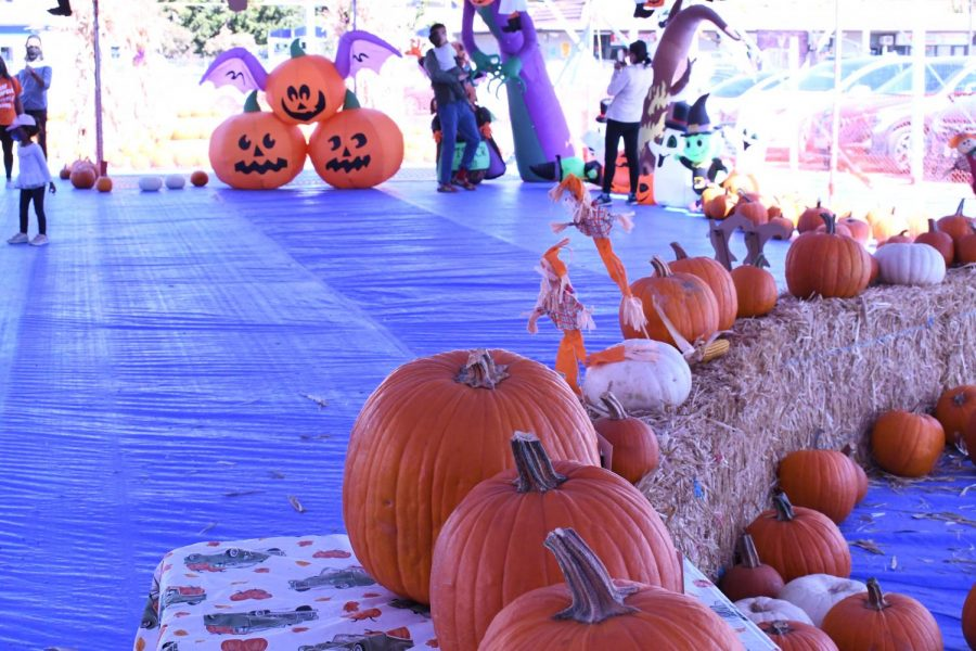 The main tent was decorated with real and inflatable pumpkins where visitors could take pictures. Souvenir tables were set up in the main tent as well, where visitors could buy pumpkin carving kits and jelly rings, along with other Halloween-themed trinkets.